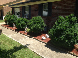 Mulch and aeration prevent weeds