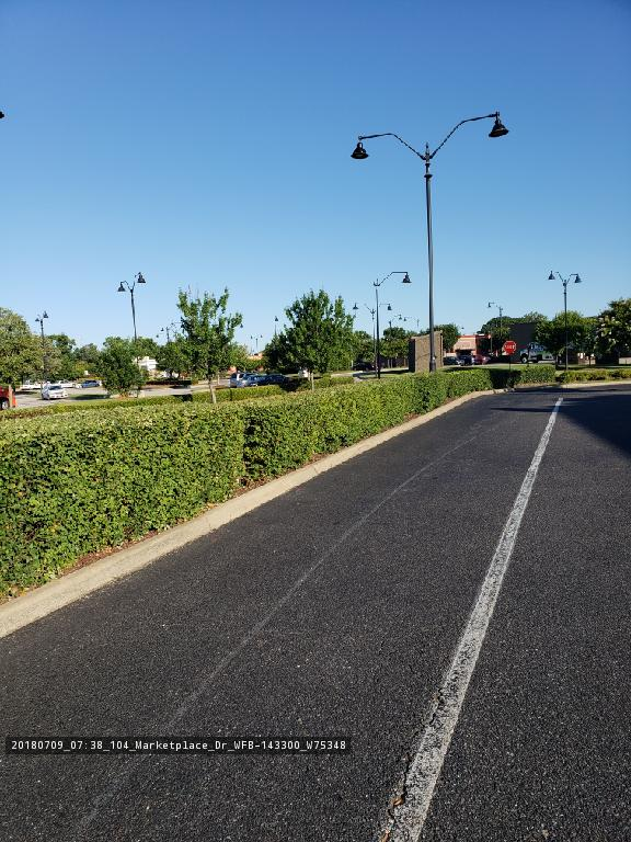 Hedges, Edging and Parking Lot Care