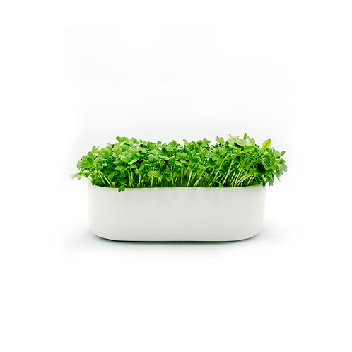 Microgreen Basic Starter Kit