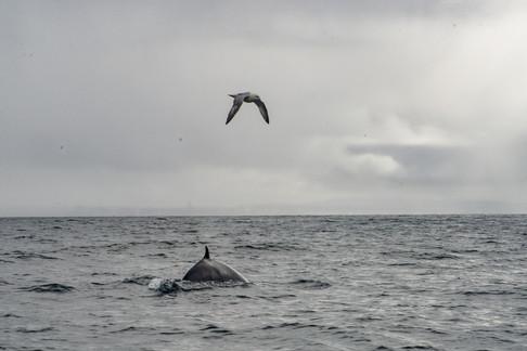 whalewatchingreykjavikINSTA-1015.jpg