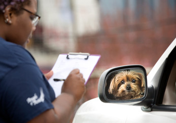 Angels of Assisi in Roanoke has started offering its low cost vet clinic on the curb to reduce people's exposure to COVID-19. Lex Taylor, a veterinarian assistant, checks in a yorkie named Gabby.