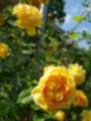 bloomsbury59.jpeg