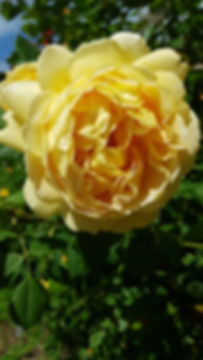 bloomsbury55.jpeg