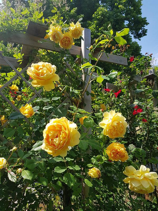 bloomsbury56.jpeg