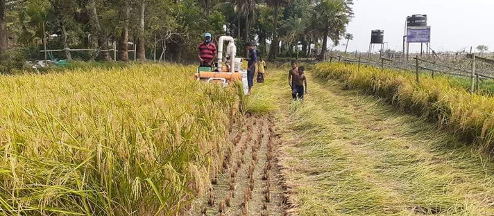 Harvesting being completed by the mini-combine harvester in Bangladesh during Covid-19