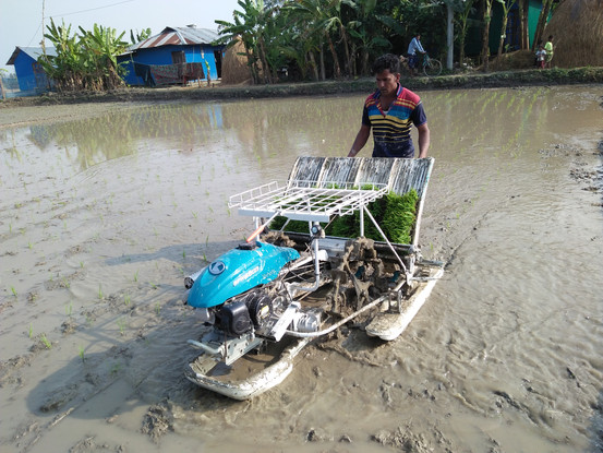 The demostration of a rice transplanter in Bangladesh