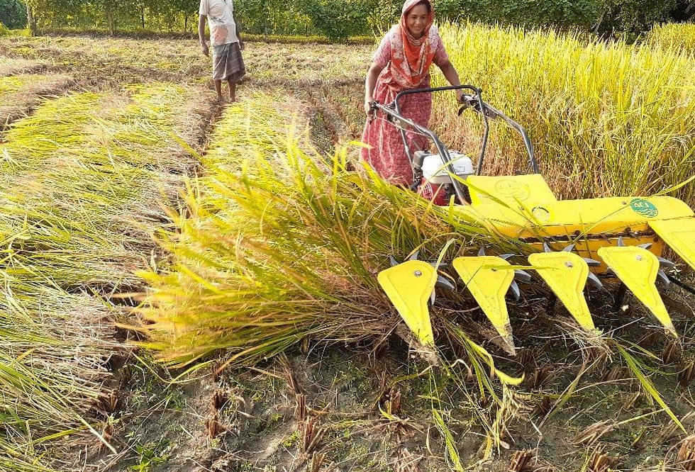 A woman farmer harvesting paddy using the reaper in Dumuria, Khulna, Bangladesh