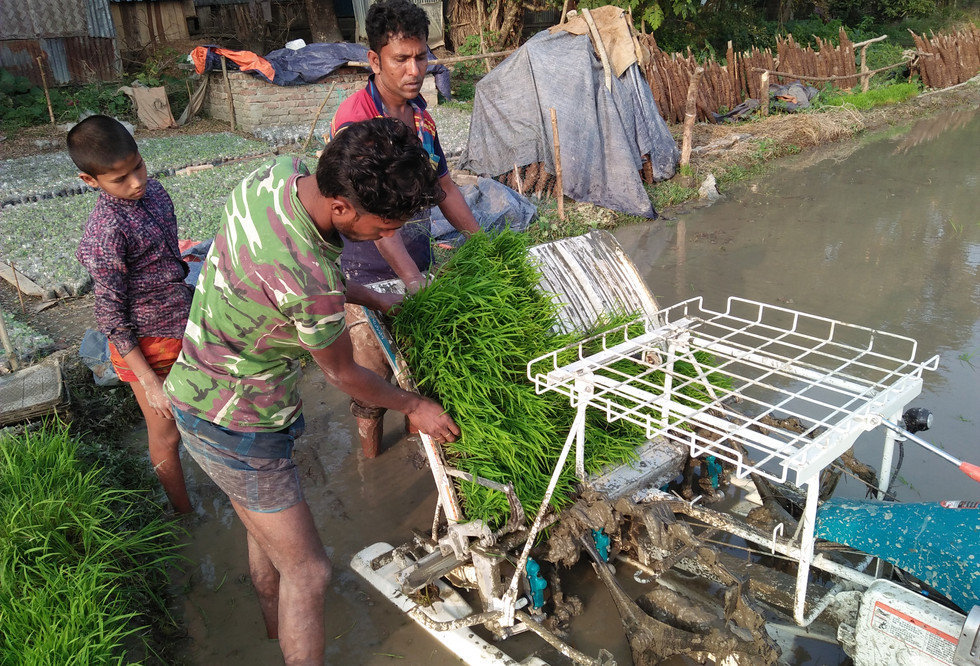 The loading of a rice transplanter in Bangladesh