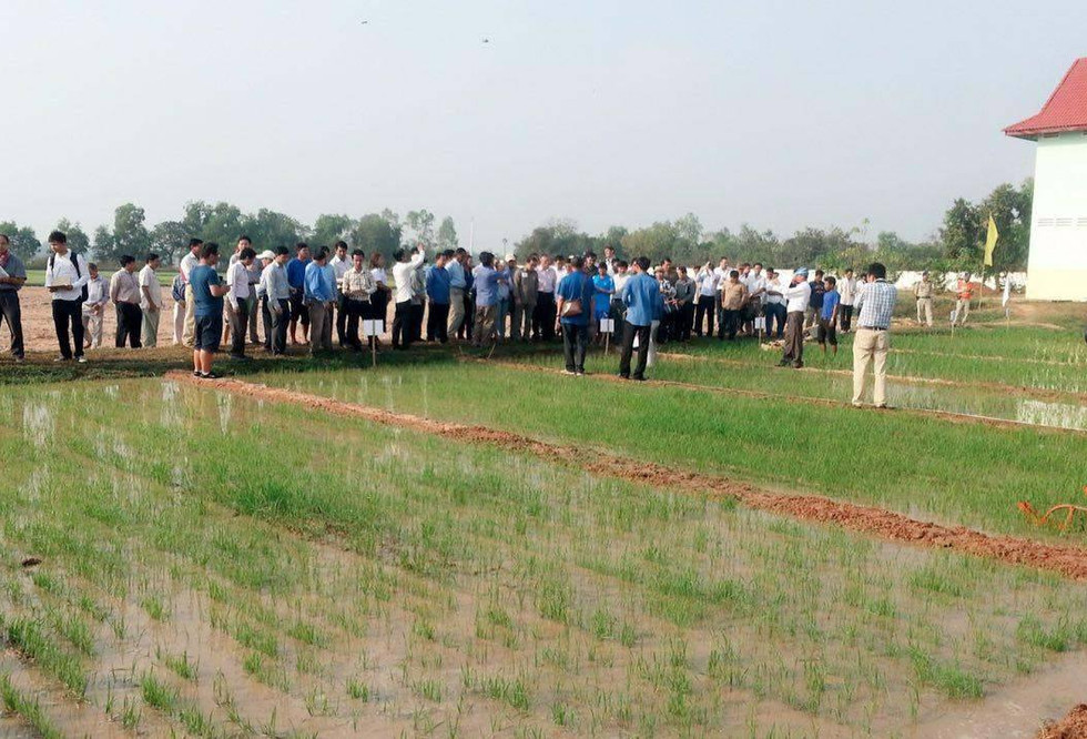 Stakeholders observe research plots in Cambodia