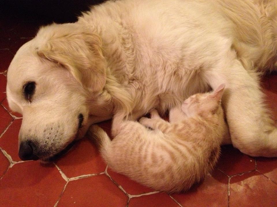 Guizmo et son chat