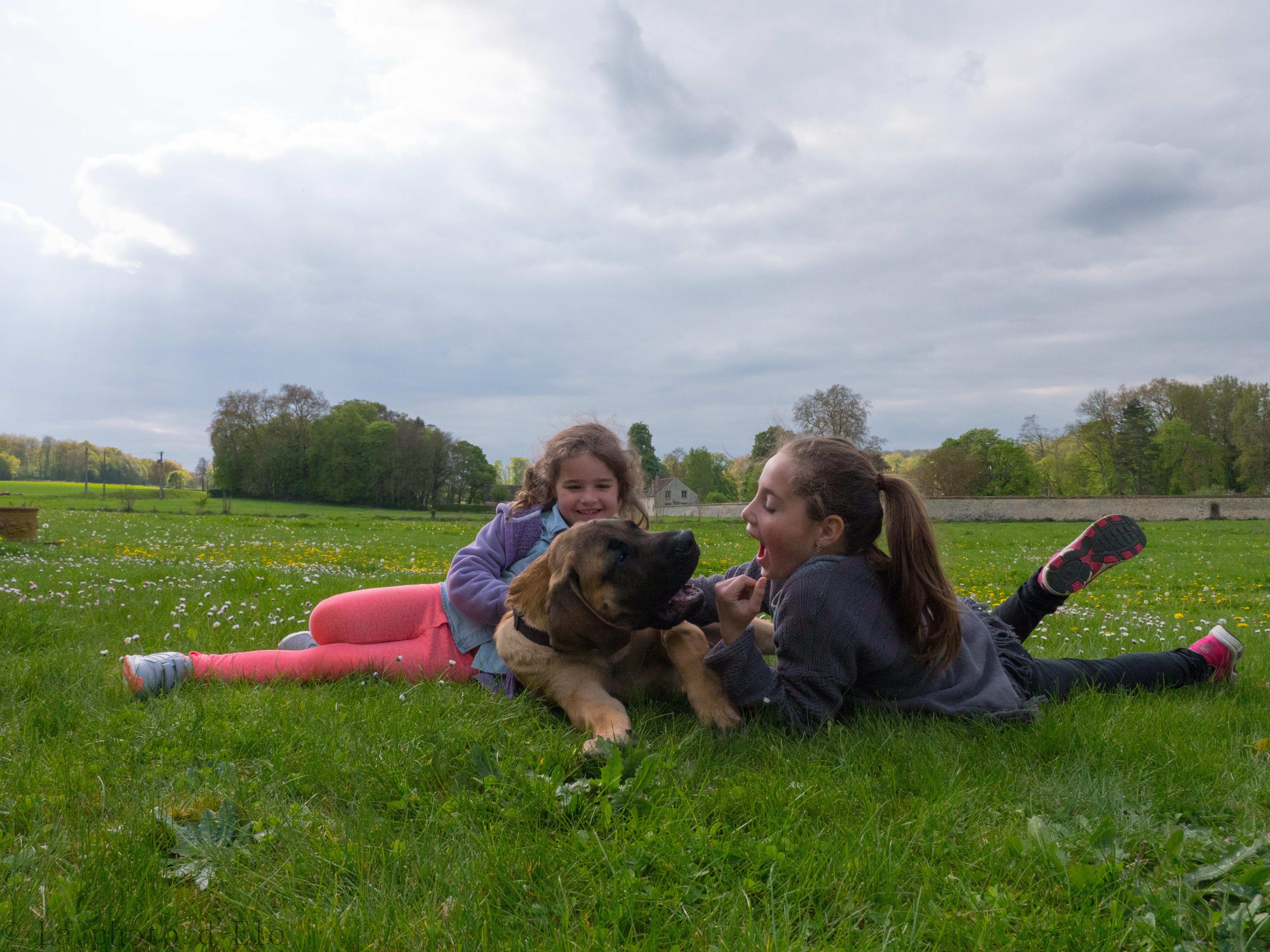 complicité chiens (78)