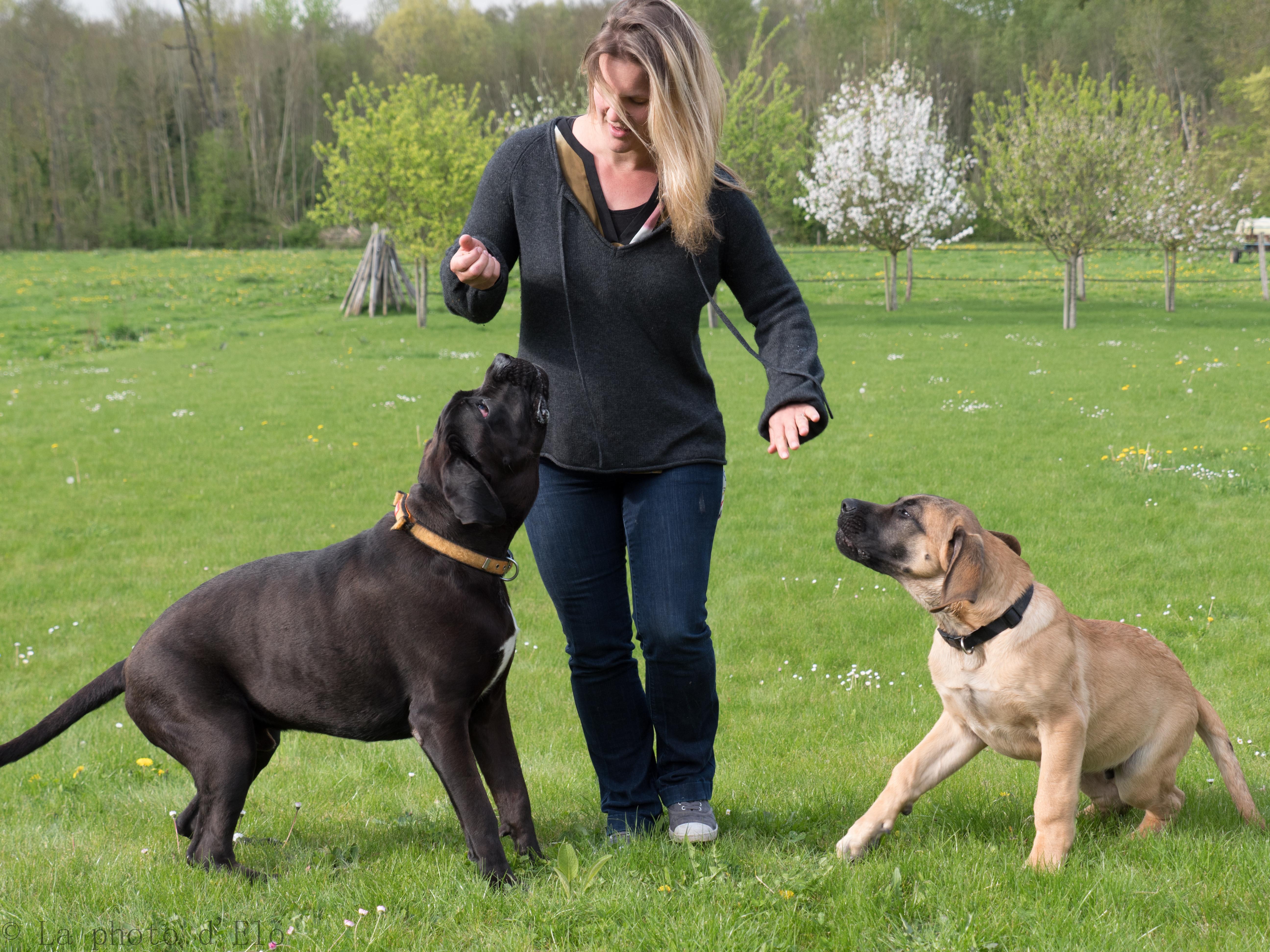 complicité chiens (2)