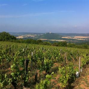 Bourgogne Vezelay Vignoble