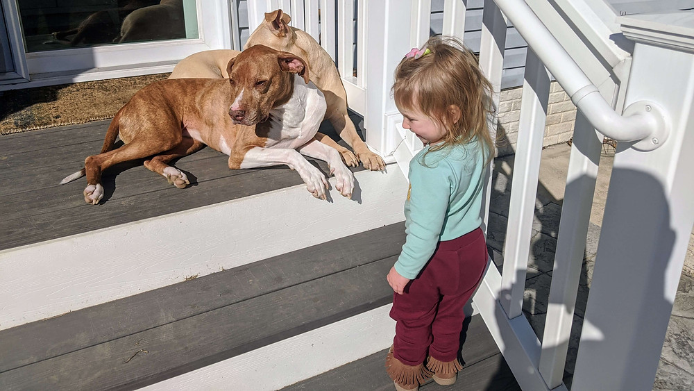 Toddler standing on deck stairs with her two dogs