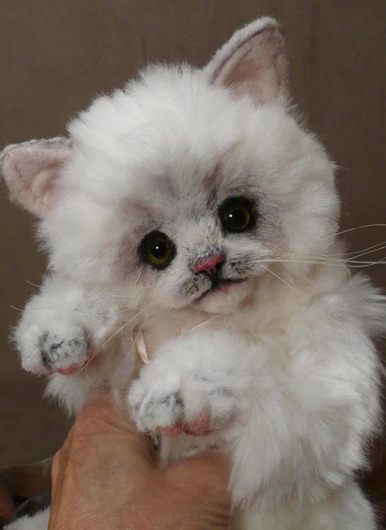Tasha the Palm Kitten