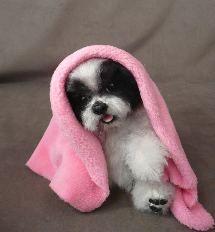 Cookie Shih Tzu