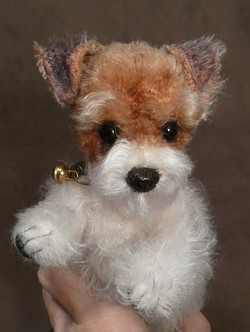 Kelsey the Fox Terrier