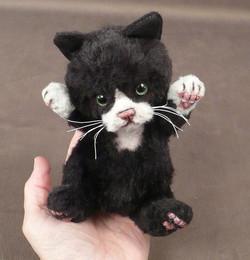 Inky Baby Palm Kitten