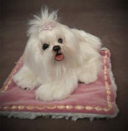 Angel Baby Maltese Puppy