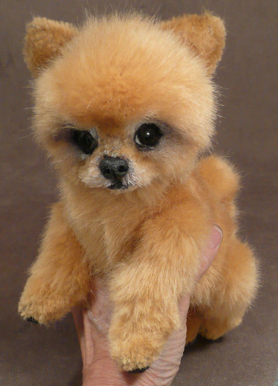 Zippy the Pomeranian