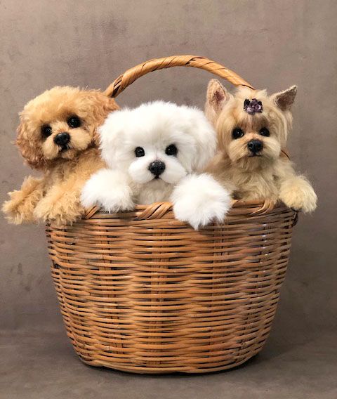 A Basket full of Pups!
