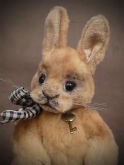 Chubs the Baby Rabbit