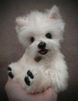 Giggles the Westie