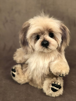 Chewy the Lhasa Apso