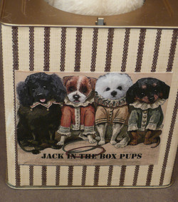 Front of Pups Box