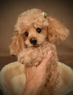 Tuffy Poodle