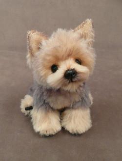 Rigby the Yorkie Puppy