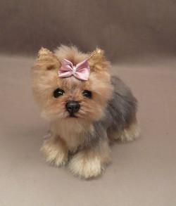 Zoe the Yorkie Puppy