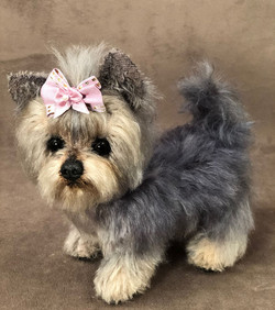 Holly the Yorkshire Terrier
