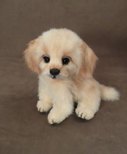 Hallie the Golden Puppy