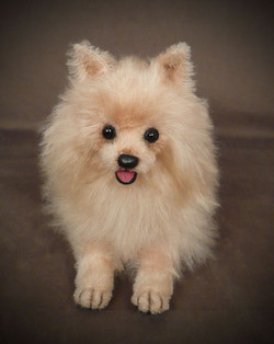 Dior Pomeranian Movie Dog