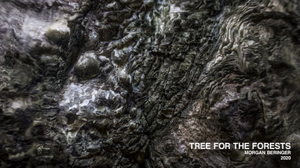 Tree For The Forests