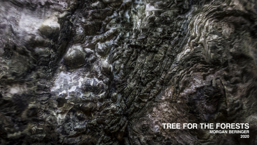 Tree For The Forests - Selection From