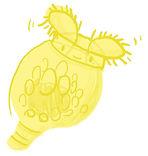 Illustration numérique d'un rotifère