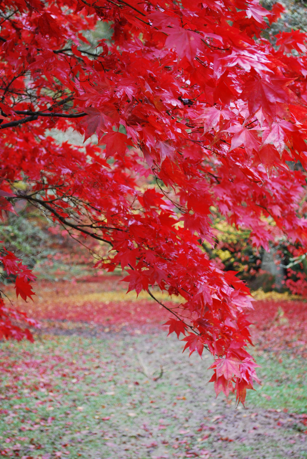 Autumn at Westonbirt