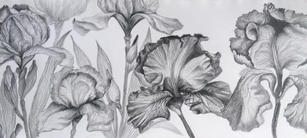 Sword lilies