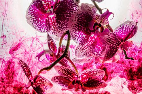 Flowers - Smoke.jpg