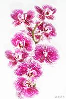 Flowers - Orchidee (2).jpg