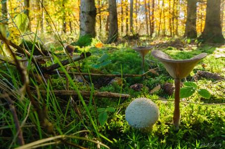 Nature (59).jpg