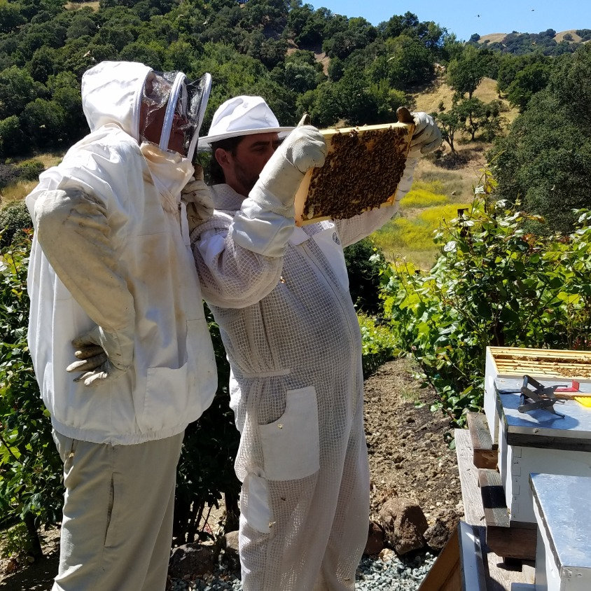 Beekeeping Consultation