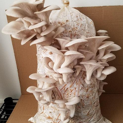 Grow-Your-Own Edible Mushroom Kit
