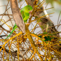 wildlife 5.jpg