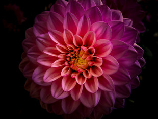 Flower+5.jpeg