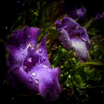 Flower+3.jpeg
