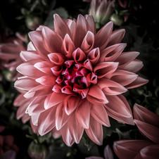 Flower+4.jpeg