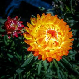 Flower+2.jpeg